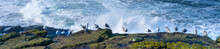 A Flock Of Sea Gulls Resting On Rocks On The Oceans Edge With Waves Crashing Near Newport, Oregon Coast