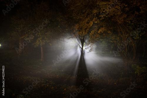 strange light in a dark forest at night Fotobehang