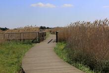 Chemin Dans Les Marais