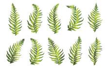 Set Of Green Fern Leaves. Vector Illustration