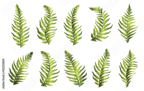 Obraz na plátně Set of green fern leaves. Vector illustration