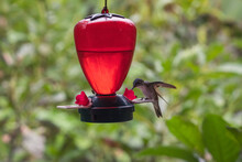 Closeup Of A Hummingbird Perched On A Nest With A Blurry Background