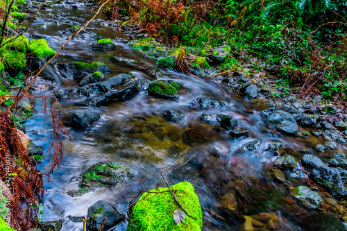 stream in the forest Fotobehang