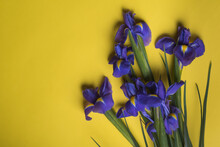 Violet Irises On Yellow Background For Card On Valentine's Day, Woman's Day, Easter Day. Top View.