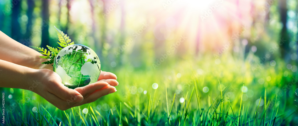 Fototapeta Environment Concept - Hands Holding Globe Glass In Green Meadow With Sunlight