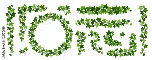 Fotografia Green climbing ivy creeper branches isolated on white background