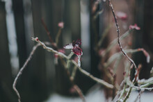 Ice And Icicles Covering Plant Branches Twigs