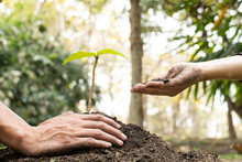 The Hands Of Two People Help Each Other Are Planting Young Seedlings On Fertile Ground, Taking Care Of Growing Plants. World Environment Day Concept, Protecting Nature