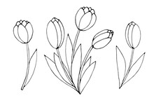 Bouquet Of Three Contour Flowers Of Tulips. Vector Hand Drawn Design Element. Simple Black Outline Doodle. Symbol Of Spring, Love, Flowering. For Greeting Card, Holidays, Coloring Pages