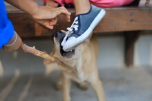 The Danger From Pets To Be Careful, Dog Bites A Child On Shoes