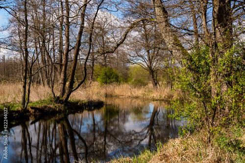 Wiosna w dolinie rzeki Supraśl, Podlasie, Polska - fototapety na wymiar