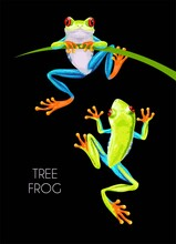 Vector Illustration Of High Detailed Tree Frog