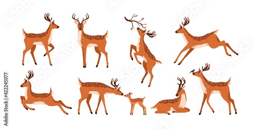 Obraz Set of cute deer isolated on white background. Adorable spotted bambis lying, running, jumping, eating and walking. Christmas reindeer. Forest horny animals. Colored flat vector illustration - fototapety do salonu