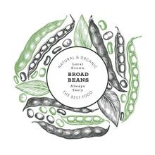 Hand Drawn Broad Beans Design Template. Organic Fresh Food Vector Illustration. Retro Pods Illustration. Engraved Botanical Style Cereal Background.