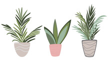 Vector Set Of Indoor Houseplants In Pots In Scandinavian Style. Modern Interior Design Elements