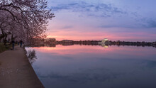 Cherry Trees Around Thomas Jefferson Memorial At Quiet Sunrise In Washington DC, USA