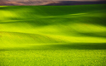 Splendid View On Of Sunlit Wavy Fields Of Agricultural Area.