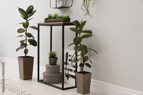 Fotografie, Obraz Console table with houseplants near light wall in room
