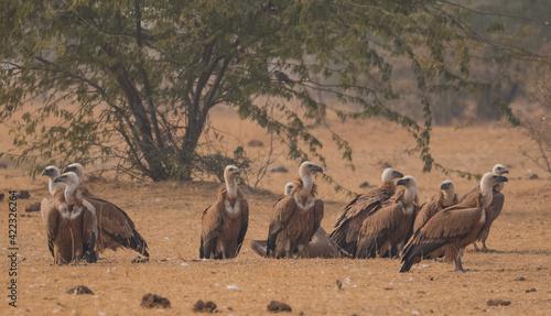 Fotografia, Obraz a pair of wildebeest in serengeti national park city