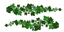 Ivy Leaves Branches. Set Of Green Ivy Garlands Isolated On White Background. Decorative Elements, Cartoon Design Style. Vector Illustration