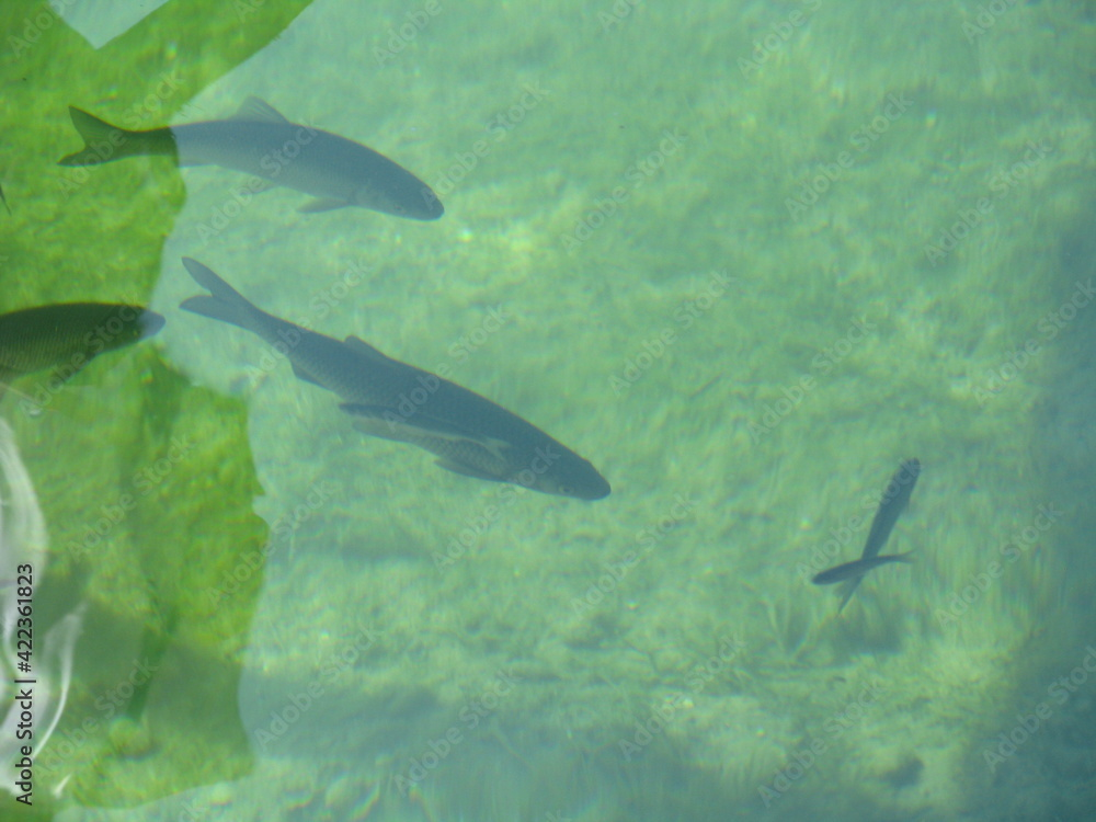 Fototapeta fishes
