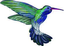 Hand Drawn Humming Bird Vector