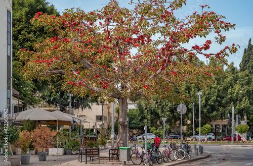 Billede på lærred Red flowers tree at boulevard Rothschild. Tel Aviv.
