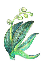 Graphic Representation Of Orchid Leaves And Buds In Pointillism Style