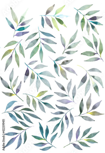 Fototapeta Watercolor floral illustration set - green leaf branches collection, for wedding stationary, fabrics, scrapbooking, greetings, wallpapers, fashion, background. Eucalyptus, olive, green leaves, etc obraz