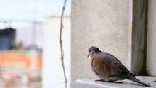 Turtledove And Pigeons On Metal Platform Standing Together