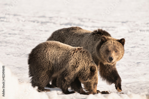 Fotografia, Obraz USA, Wyoming, Grand Teton National Park