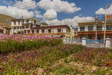XIAHE, CHINA - AUGUST 24, 2018: Garden Cosmos (Cosmos Bipinnatus) Flowers In Xiahe Town, Gansu Province, China