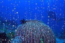 Diver Breathes Air Under Water Bubbles, Releases Gas, Landscape Underwater Depth