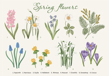 Spring Flowers. Blooming  Garden. Vector Illustration.