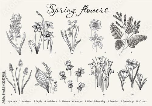 Obraz na plátně Spring flowers. Blooming  garden. Vector illustration.