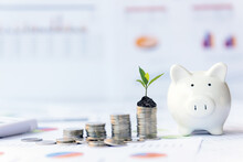 Piggy And The Tree  Growing On Money Coin Stack For Investment And Saving With Financial Report Of Investor Real Estate Business, City And Graph Background