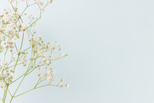 Closeup Of Gypsophila Flower In Front Of Blue Pastel Background. Fragility Spring Concept With Copyspace.