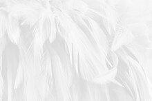 Beautiful White Grey Bird Feathers Pattern Texture Background.