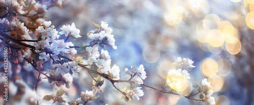 Canvastavla spring blooming garden background, delicate white flowers on trees, seasonal mar
