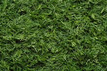 Background From Cut Green Fresh Dill. Seasonal Vegetables For Vitaminization And Health