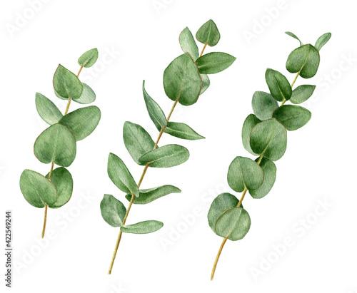 Fotografia Watercolour branches of eucalyptus