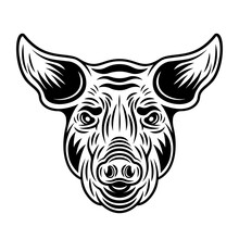 Pig Head Front View Vector Monochrome Illustration In Vintage Style Isolated On White Background