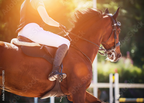 Obraz na plátně A fast bay horse with a dark mane and a rider in the saddle gallops through the arena at a show jumping competition, illuminated by bright sunny warm light on a summer day