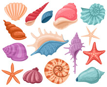 Cartoon Seashells. Summer Beach Sea Shells, Underwater, Ocean Reef Tropical Shells. Marine Beach Shells Decoration Vector Illustration Set