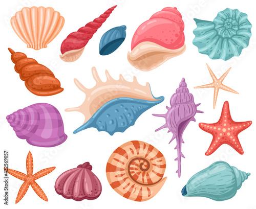 Fotografia Cartoon seashells