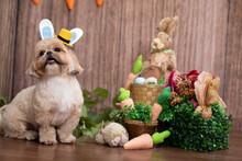 Fotografia De Cachorro Com Tema De Páscoa Cenário De Páscoa Com Cachorro