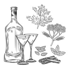 Set Of Vermouth. Cocktail Glass And Bottle Vermouth, Wormwood, Yarrow, Cinnamon, Mint, Cardamom. Engraving Vintage Style.