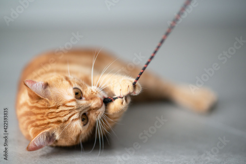 Fotografie, Obraz Cute funny red tabby kitten plays  at home. Adorable young pet.