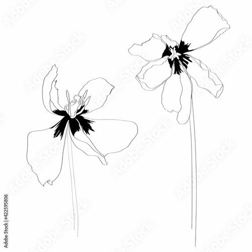 Fototapeta Line floral elements