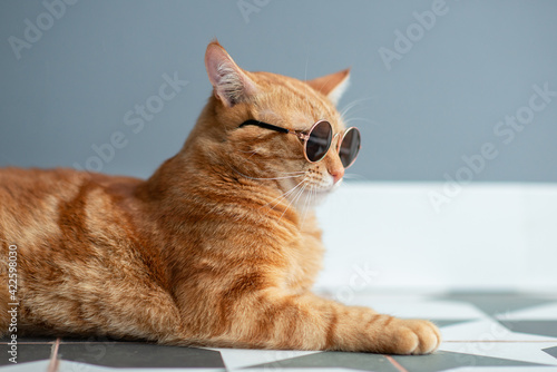 Fototapeta Fashion red tabby cat wearing sunglasses posing indoor